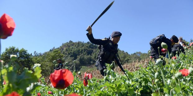 Mexican authorities destroying an illegal poppy field. (Getty/AFP)